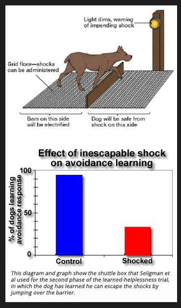 Seligman e outros construiram a grade de choques elétricos com que fizeram experimentos com cachorros.
